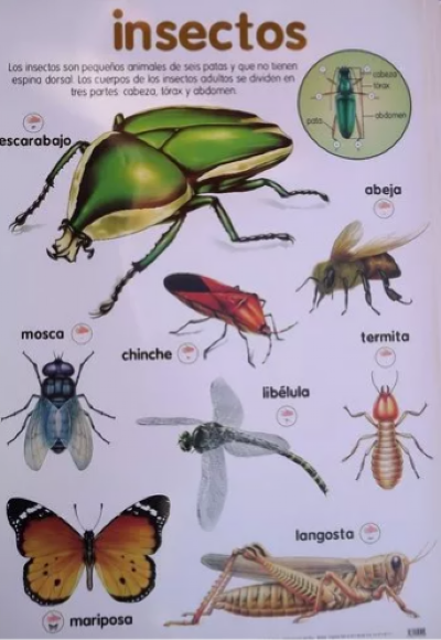 Poster Insectos